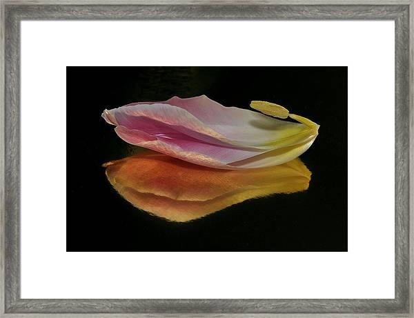 Pink Tulip Petal Reflected On Black Framed Print