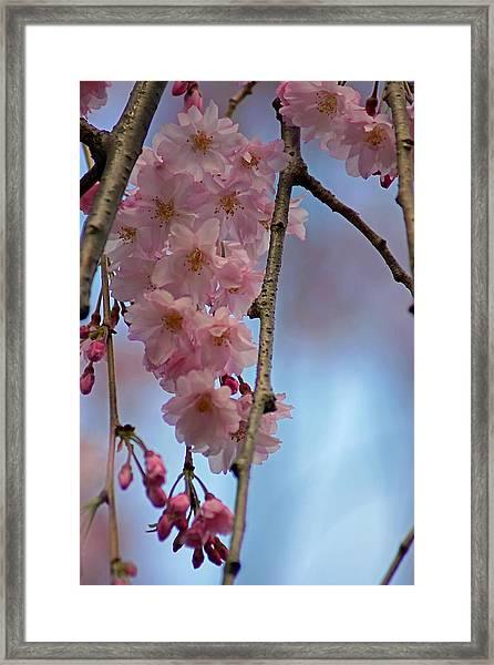 Pink With Blue Sky Framed Print
