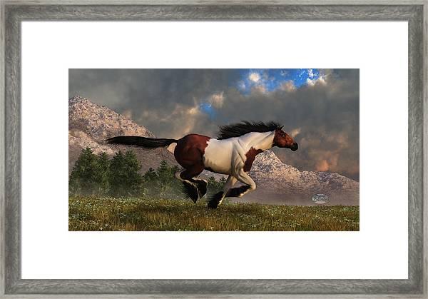 Pinto Mustang Galloping Framed Print
