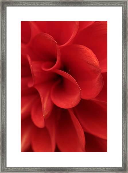 Scarlet Pipes Framed Print