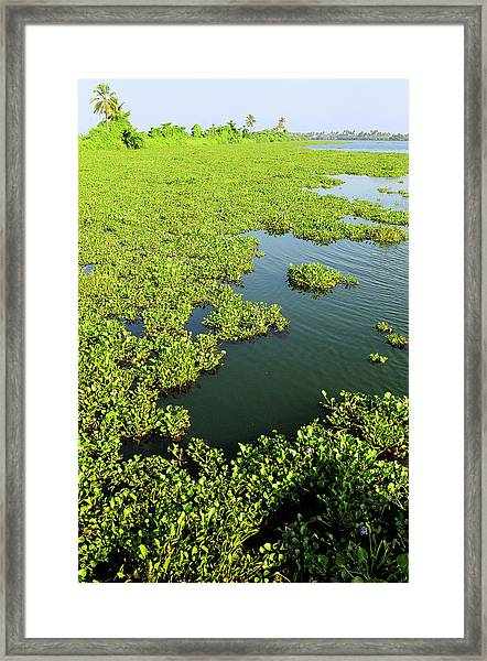 Plant Growth Along The Kumarakom Framed Print