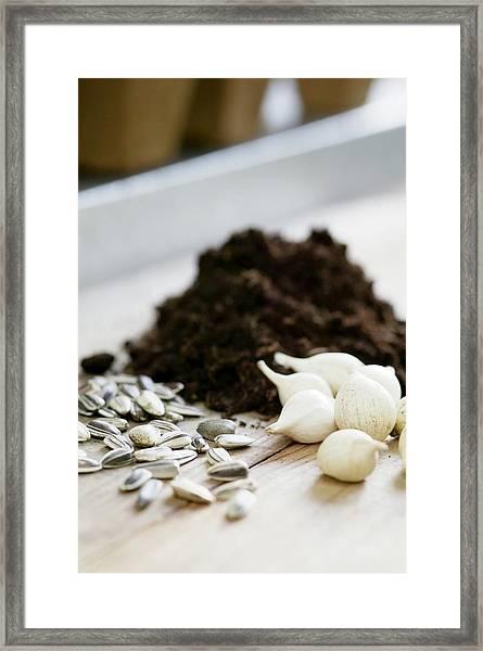 Plant Seeds And Bulbs Framed Print