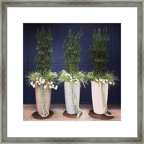 Planters And Blue Framed Print