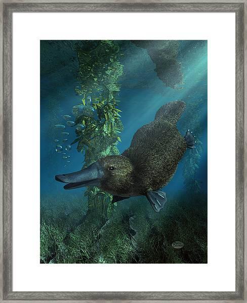 Platypus Framed Print