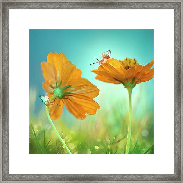 Play Time! Framed Print by Peiling Lee