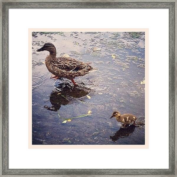 Playing In Water Framed Print