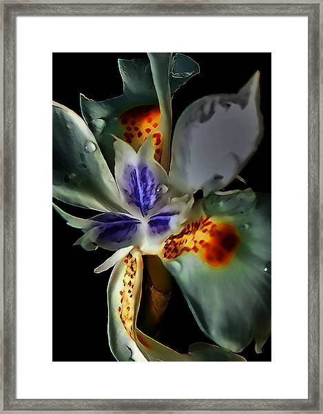 Pleatleaf Flower Framed Print