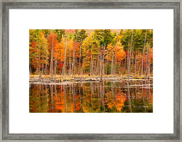 Plethora Of Fall Colors Framed Print