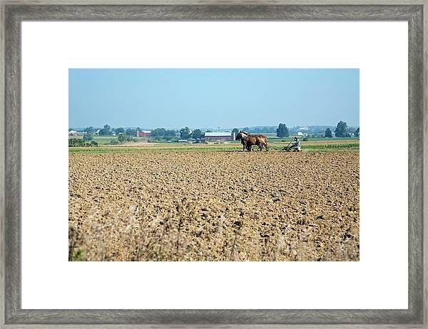 Ploughing On An Amish Farm Framed Print