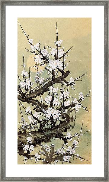 Plum Blossom Framed Print by Vii-photo