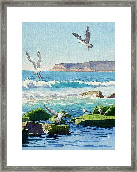 Point Loma Rocks Waves And Seagulls Framed Print