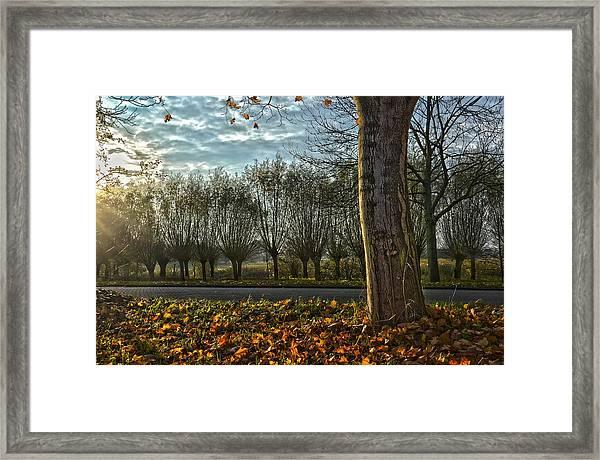Pollard Willows In Rotterdam Framed Print