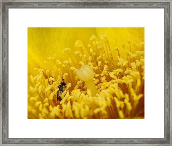 Pollen Forest Framed Print