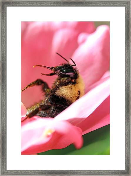 'pollen High' Framed Print