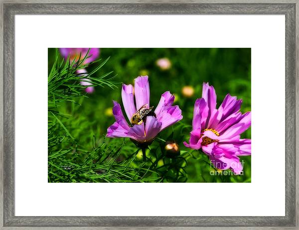 Pollinating Flowering Framed Print