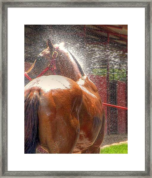 Polo Pony Shower Hdr 21061 Framed Print