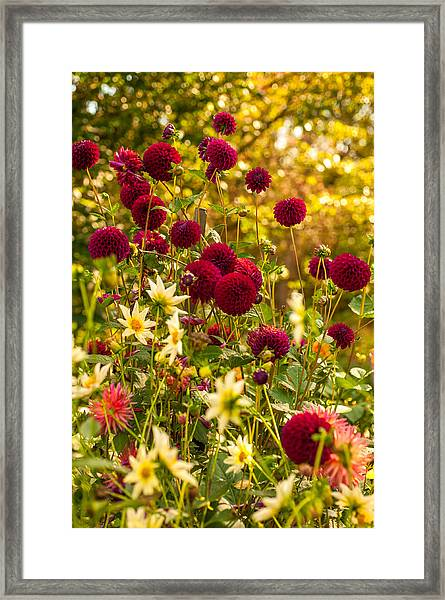 Pom Pom Party Framed Print