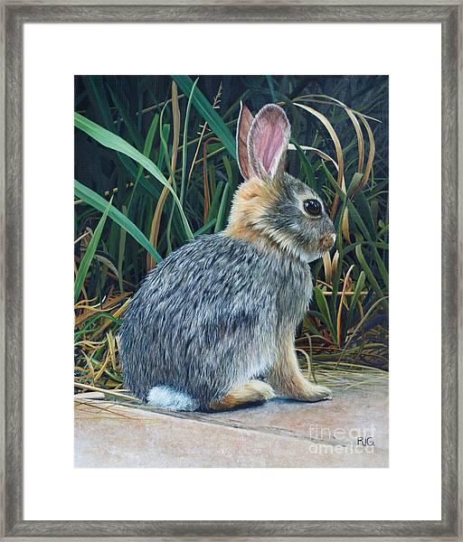 Pompey's Pillar Rabbit Framed Print