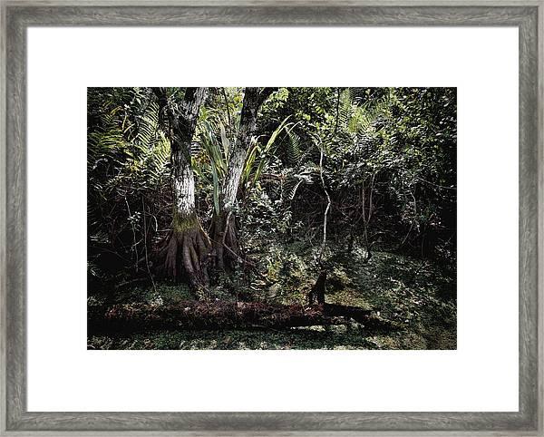 Pond Apple-1 Framed Print