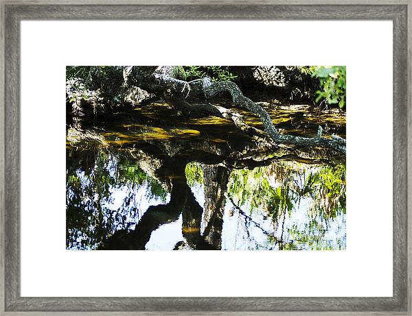 Pond Reflection Framed Print