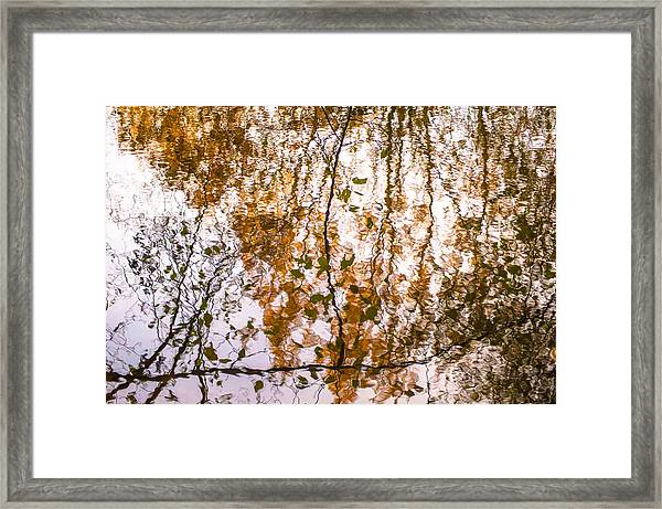 Pond Reflections #3 Framed Print
