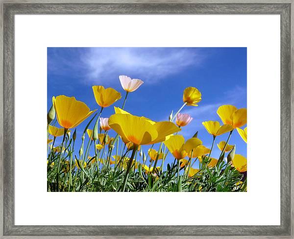 Poppies And Blue Arizona Sky Framed Print