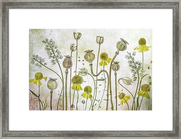 Poppies And Helenium Framed Print by Mandy Disher