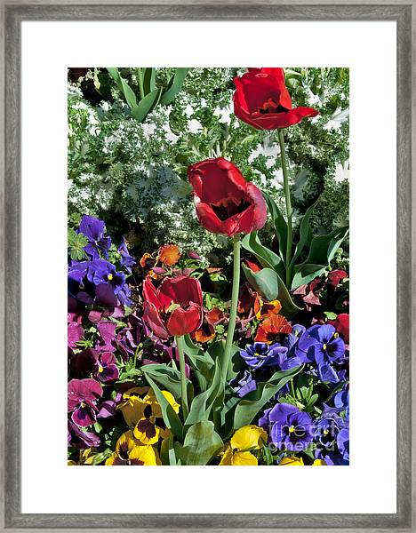 Framed Print featuring the photograph Poppies by Mae Wertz