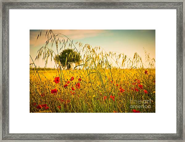 Poppies With Tree In The Distance Framed Print