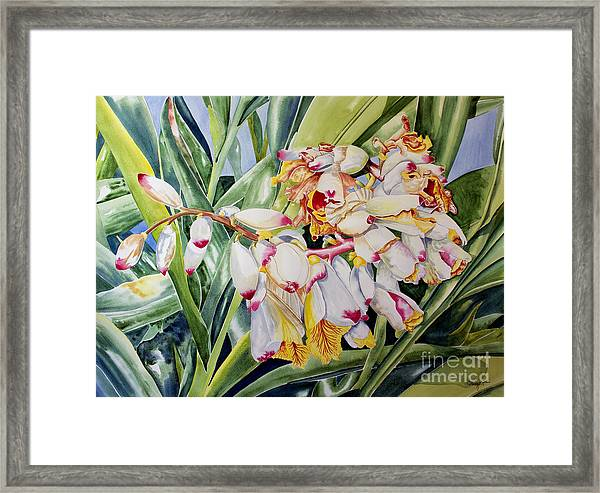Poppin Out II Framed Print