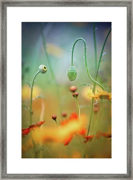 Poppy Field Framed Print by Steve Moore