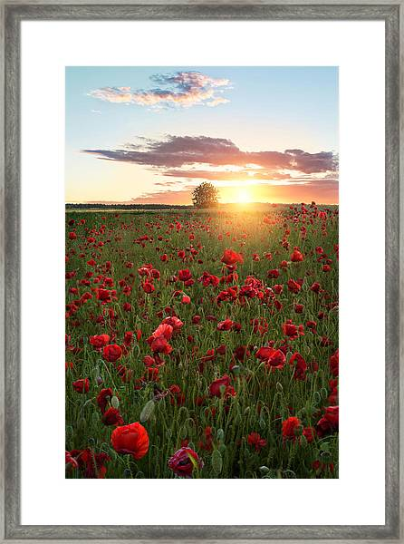 Poppy Fields Of Sweden Framed Print by Christian Lindsten