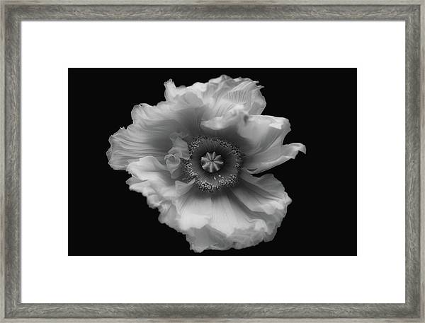 Poppy In Mono Framed Print by Lotte Gr??nkj??r