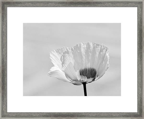 Poppy In White Framed Print