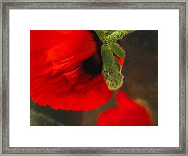 Poppy Oriental Red Framed Print