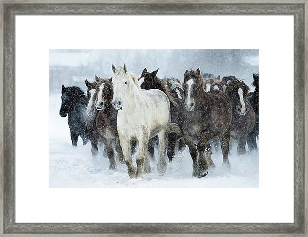 Populations Of Horses Framed Print by Makieni's Photo
