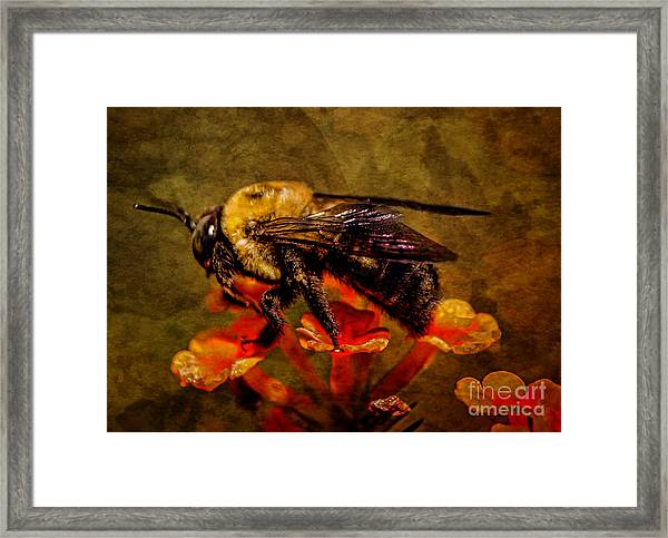 Portrait Of A Bee Framed Print