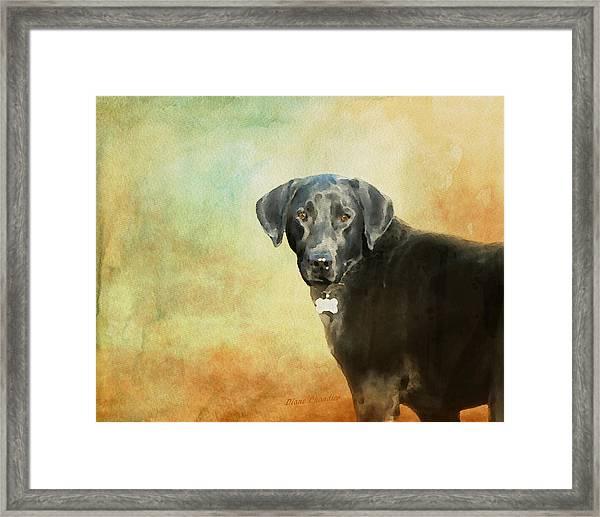 Portrait Of A Black Labrador Retriever Framed Print