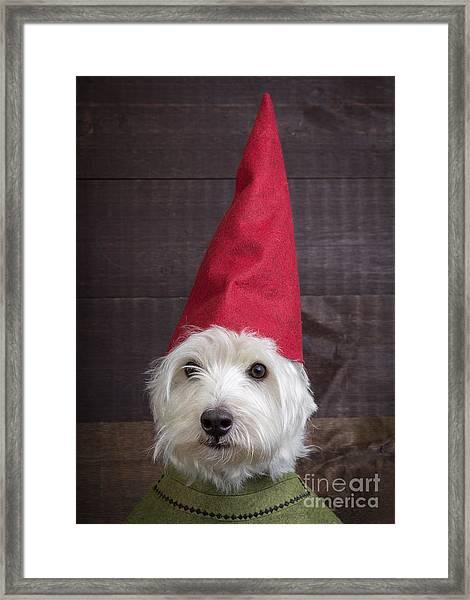 Portrait Of A Garden Gnome Framed Print