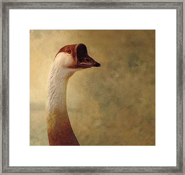 Portrait Of A Goose Framed Print