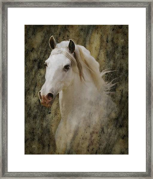 Portrait Of A Horse God Framed Print