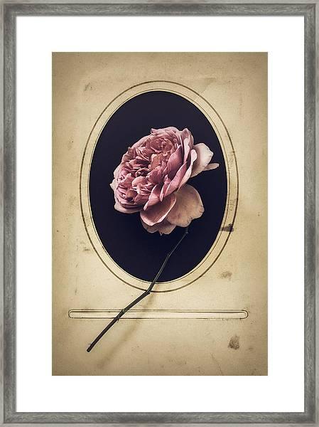 Portrait Of A Rose Framed Print