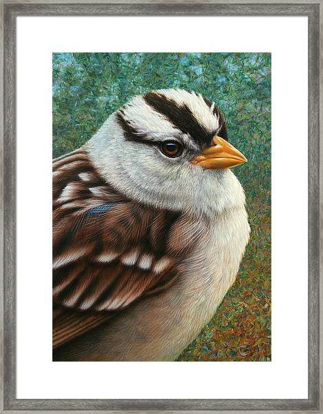 Portrait Of A Sparrow Framed Print