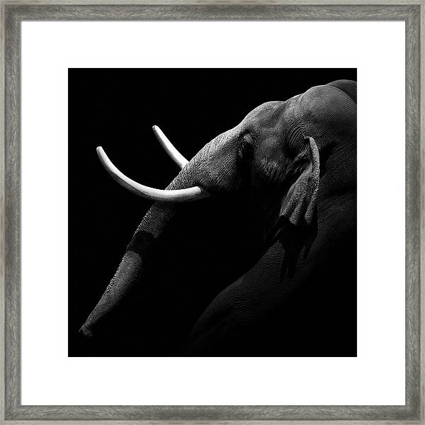 Portrait Of Elephant In Black And White Framed Print
