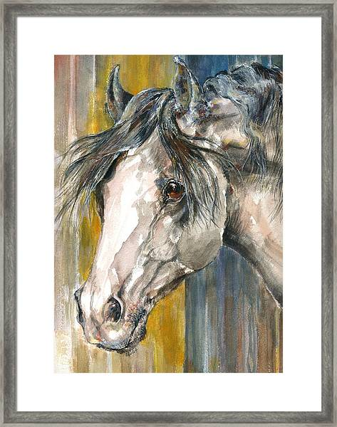Portrait Of Gray Framed Print by Mary Armstrong
