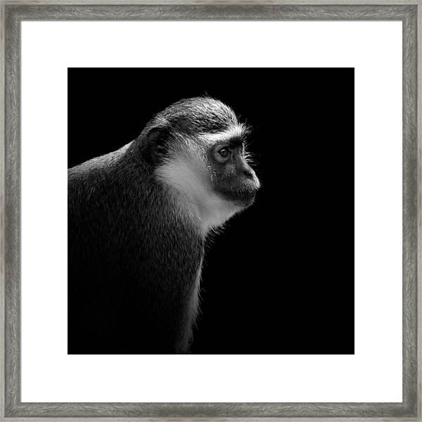 Portrait Of Green Monkey In Black And White Framed Print
