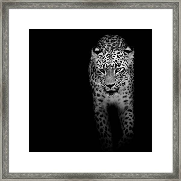 Portrait Of Leopard In Black And White II Framed Print