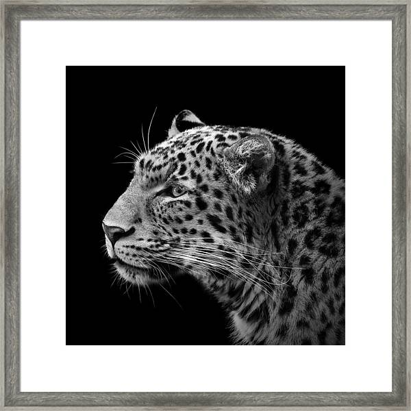 Portrait Of Leopard In Black And White IIi Framed Print