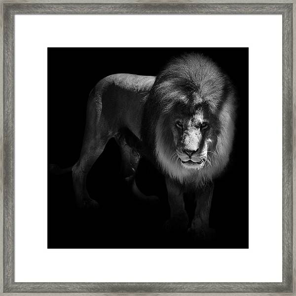 Portrait Of Lion In Black And White Framed Print
