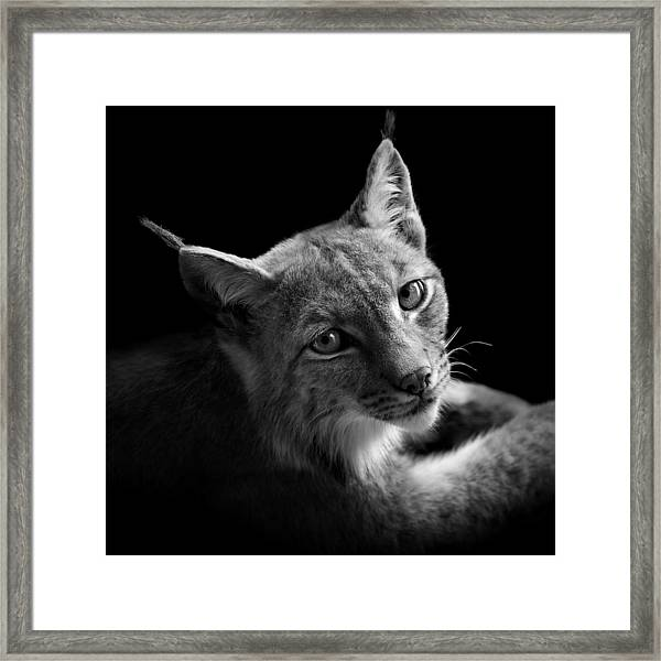 Portrait Of Lynx In Black And White II Framed Print